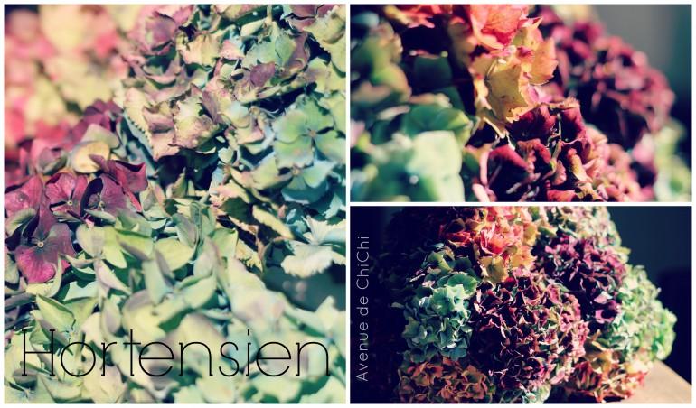 Collage Hortensien