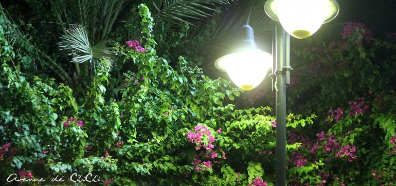 Laternen und Blumen