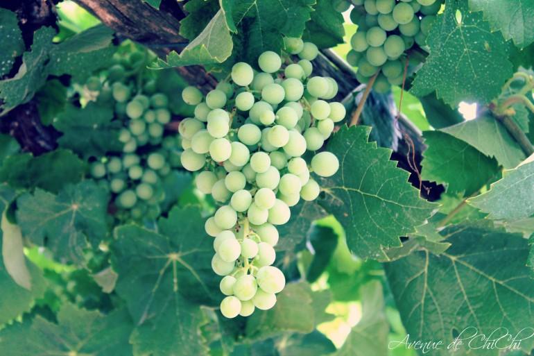 Weintrauben für Blog