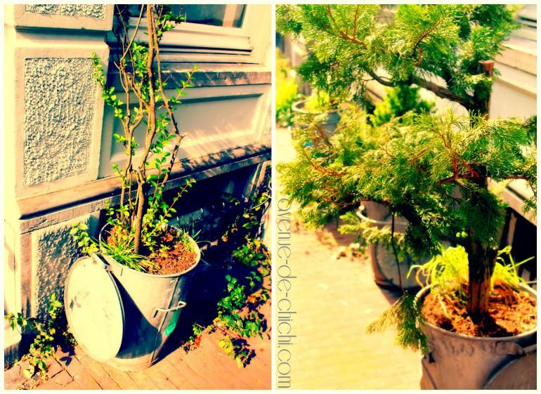Collage Pflanzen